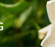 Heinen Plant Catalog