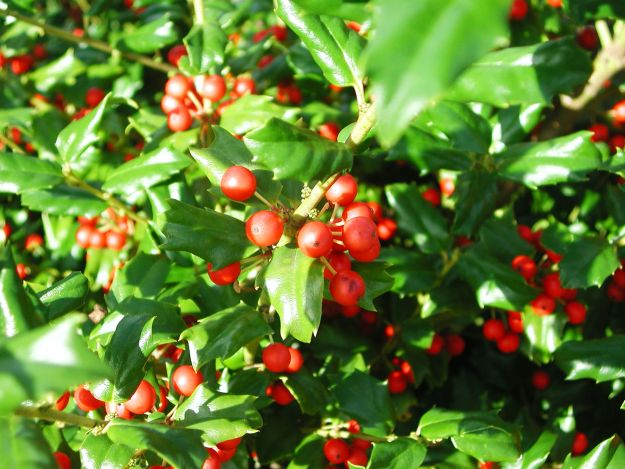 Heinen Landscape Holly China