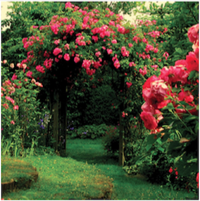 Ultimate Sweetheart Rose Garden