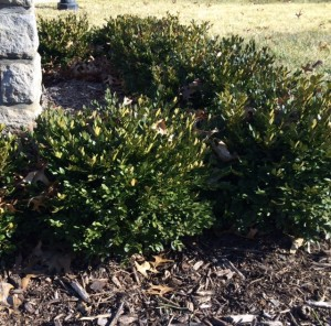 Heinen Landscape Boxwood Green Velvet