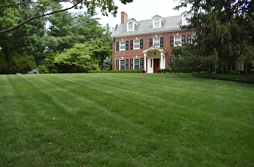 Three Steps to Give Your Lawn a Complete Renovation