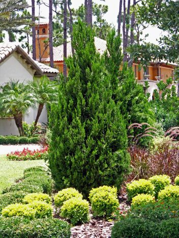 Heinen Landscape Juniper, Spartan