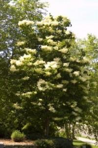 Heinen Landscape Lilac Ivory silk