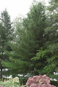 Heinen Landscape Pine White