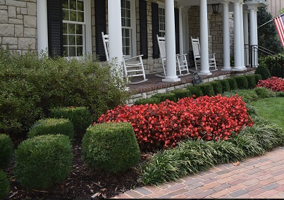 Prepare Your Fall Plantings with Heinen Landscape's Interactive Plant Catalog