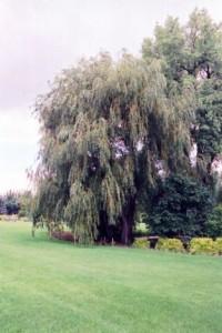 Heinen Landscape Willow Prairie Cascade