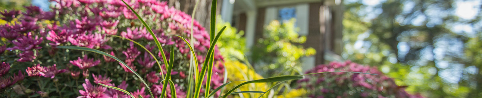 Spring into Landscape Planning – with Heinen's Free Guide!