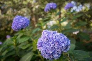 heinen_landscaping_3094